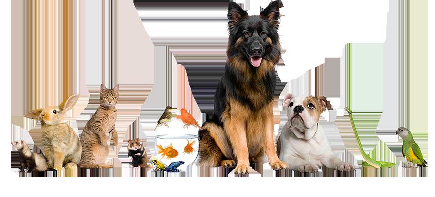 Scopri la sezione Veterinaria e Animali