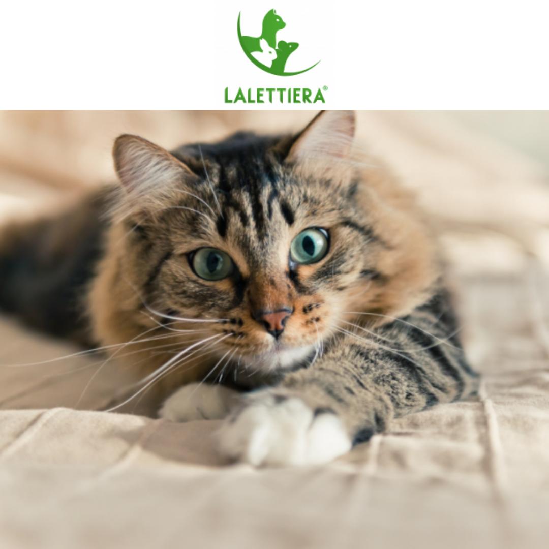 -5% su lettiera per gatti